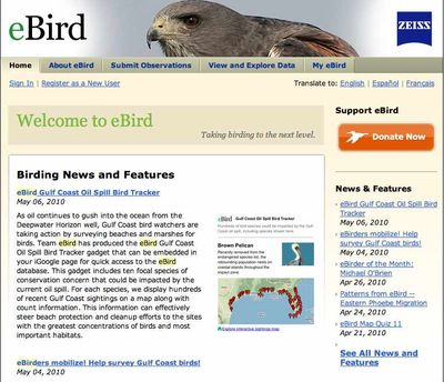 Ebird Org Is Our Friday Link Bostonzest