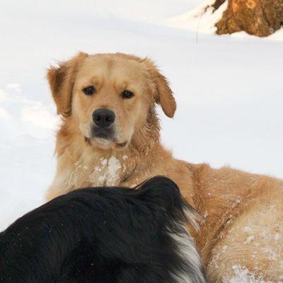 Baxter-snoweater- Golden-Bostonzest 1-27-11  010