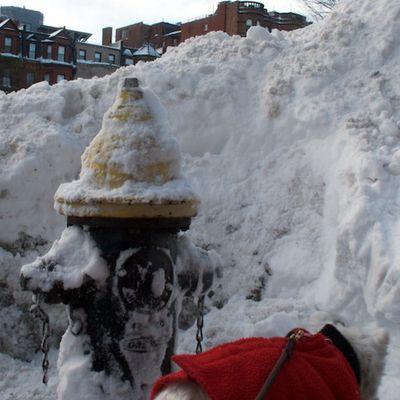 IMG_0155 - Version 22011-01-27-BostonZest-hydrant