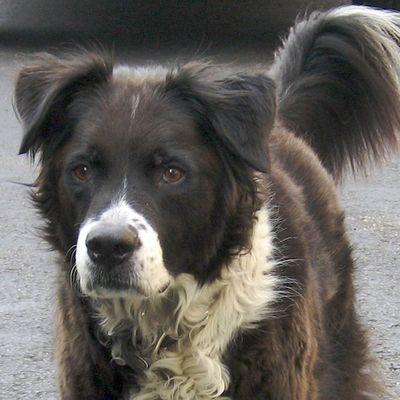 IMG_0150 - Version 22008-05-30-Sunday-dog-threedogs-© 2011 Penny Cherubino