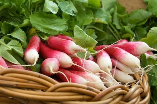 French-breakfast-radish-©2010 pennycherubino