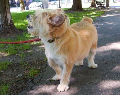 IMG_0766 - Version 22011-07-31Gus-back-bay-dog- ©2011 Penny Cherubino© 2011 Penny Cherubino