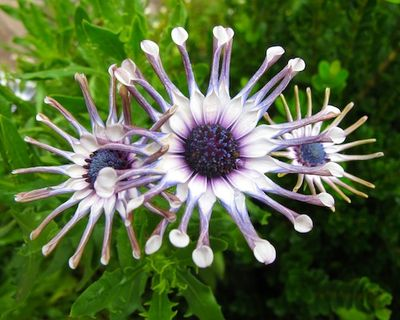 IMG_2705 - Version 22011-09-29alien-flower-© 2011 Penny Cherubino