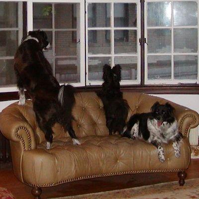 P1010058 - Version 22011-03-31-Sunday-dog-threedogs-© 2011 Penny Cherubino