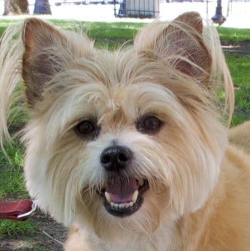 IMG_0769 - Version 22011-07-31Gus-back-bay-dog- ©2011 Penny Cherubino© 2011 Penny Cherubino