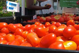 IMG_0843 - Version 22011-08-01-central-square Farmers-market-© 2011 Penny & Ed Cherubino www-Bostonzest-com© 2011 Penny Cherubino