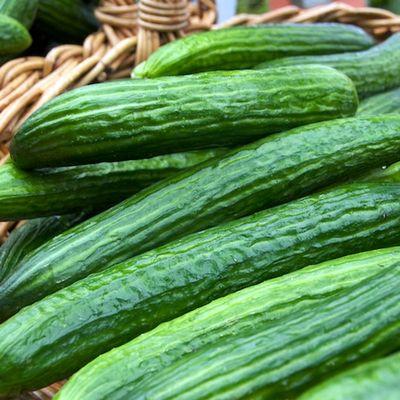 DSC_7642 - Version 22011-05-17atlas-farm-cucumbers-organic-copley-2011- © Penny Cherubino∂© 2011 Penny Cherubino