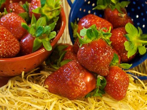 DSC_8353 - Version 22011-05-31-Strawberries-Atlas-farm-small-©2011 Penny Cherubino© 2011 Penny Cherubino