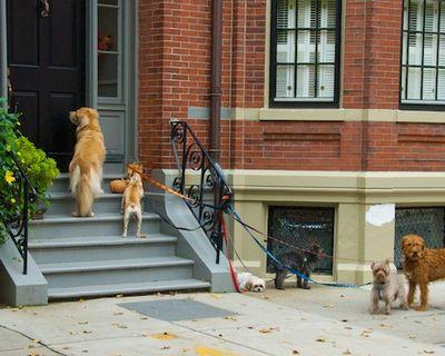 DSC_3815 - Version 22011-10-18Halloween-dogs-trick-or-treat-back-bay--boston© 2011 Penny Cherubino