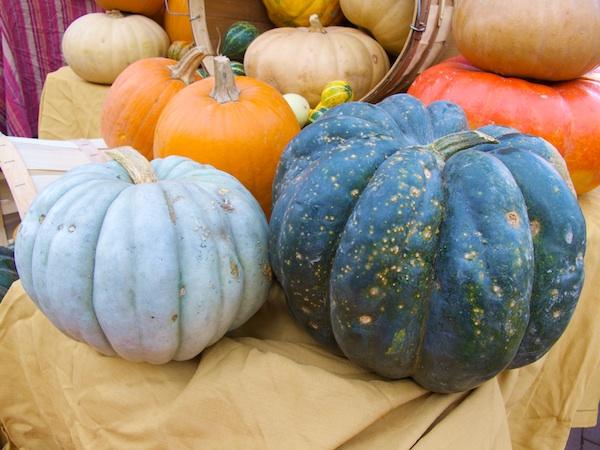 IMG_3295 - Version 22011-10-25Blue-Pumpkins-atlas-farms-© 2011 Penny Cherubino
