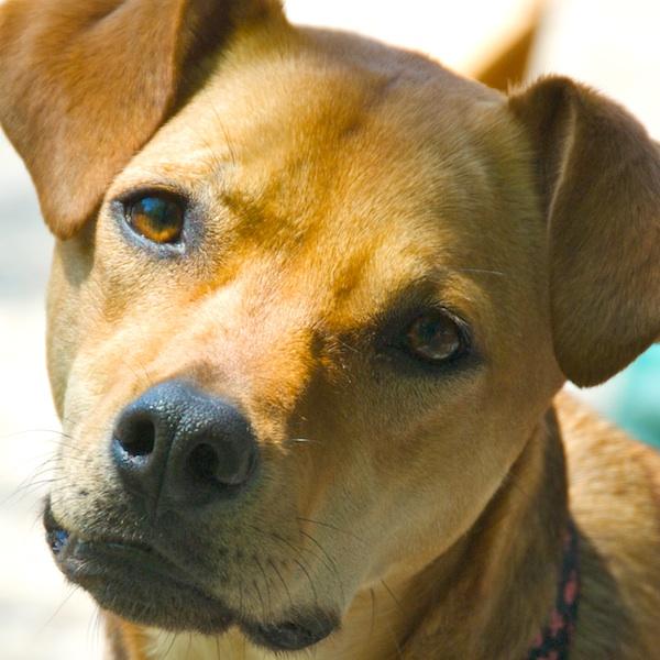 PMC_3212 - Version 22012-05-20-amber-Sunday-dog-fresh-paint-© 2011 Penny Cherubino