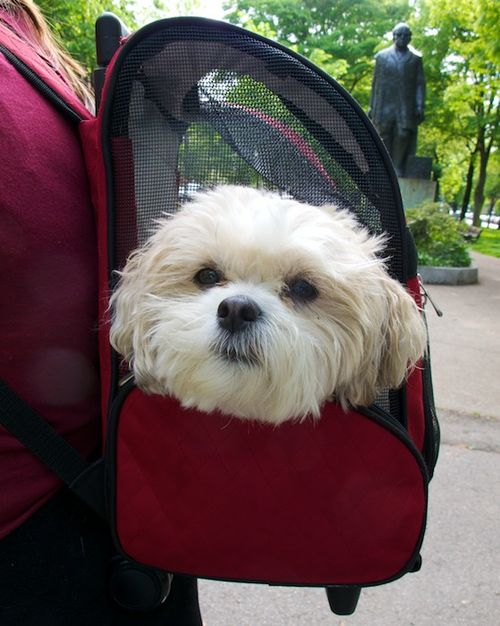 IMG_5147 - Version 22012-05-16-summer-riding-dog-carrier-backpack-© 2011 Penny Cherubino