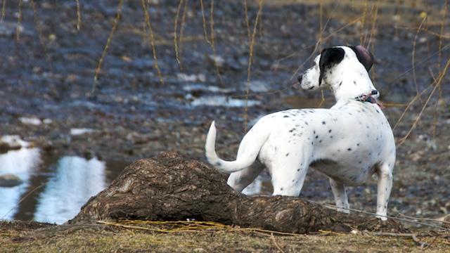 PMC_7921 - Version 22012-02-25-solie-sunday-dog- © 2011 Penny Cherubino