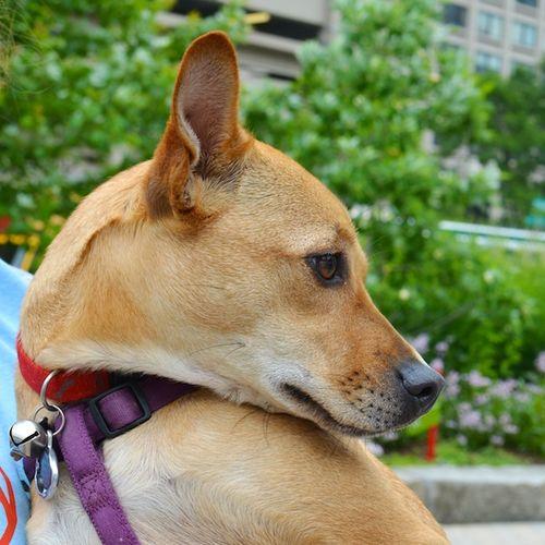 DSC_6138 - Version 22012-06-16-Rose-mix-greenway-boston-rescue-mspca-© 2011 Penny Cherubino