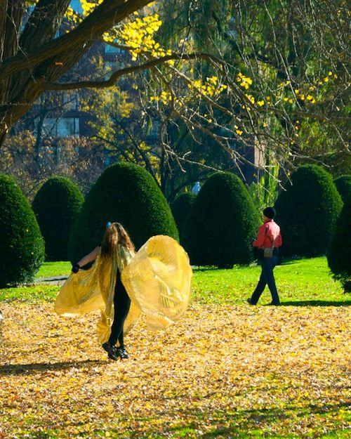 PMC_7271 - Version 22012-11-18-Isis-wings-dancer-public-garden-© 2011 Penny Cherubino