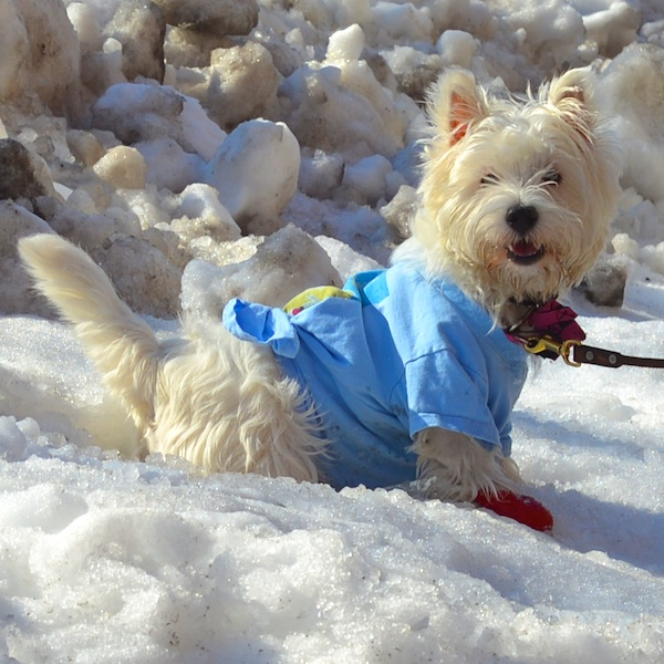 CHE_1800 - Version 32013-02-13-poppy-snowgirl-© 2011 Penny Cherubino