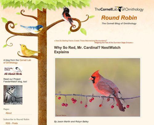 Round robin blog