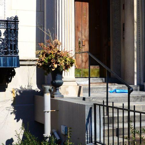 CHE_2985 - Version 22013-03-17-dead-plants-real-estate-© 2011 Penny Cherubino