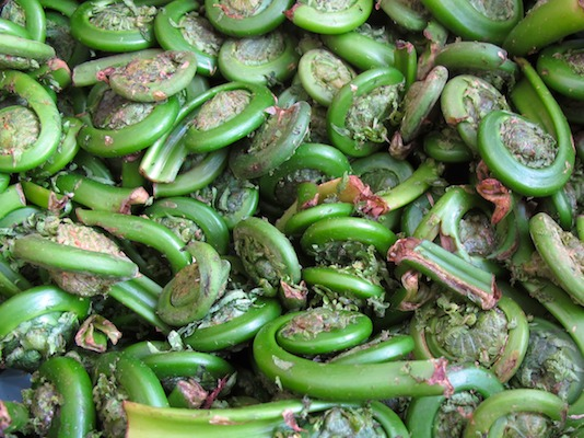 2011052011-05-27-153847-(market-scene-boston-copley-prudential)-(spring-brook-farm-fiddlehead-ferns)