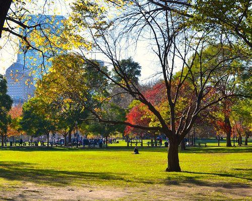 DSC_0044 - Version 22012-11-10-boston-common-foliage-bare tree-© 2011 Penny Cherubino