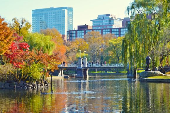 DSC_0308 - Version 22012-11-18-public-garden-fall-sunshine-lagoon-geese-bridge-© 2011 Penny Cherubino (1)