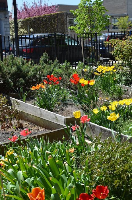 -warren-clarendon-community-garden-boston- (5)