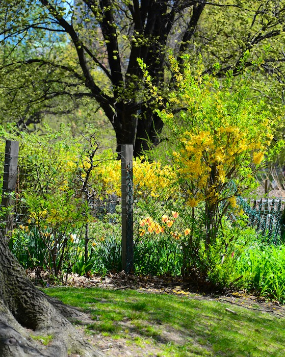 -fenway-victory-communiy-garden-boston- (10)