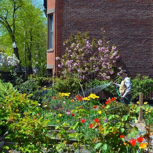 -warren-clarendon-community-garden-boston-