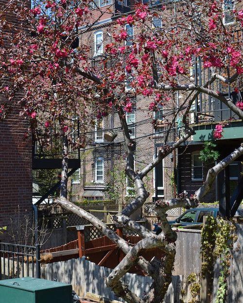 -warren-clarendon-community-garden-boston- (3)