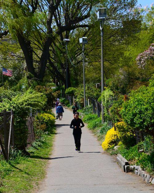 -fenway-victory-communiy-garden-boston-