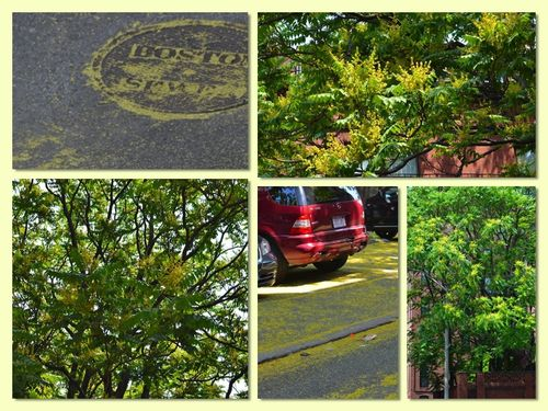 Stink tree collage