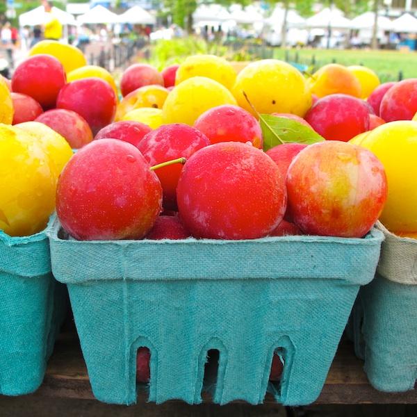 IMG_6658 - Version 22013-07-23-plums-keown-orchard-© 2011 Penny Cherubino