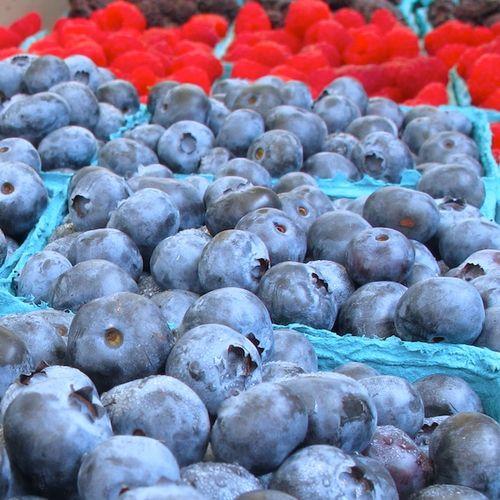 IMG_6651 - Version 22013-07-23-hamilton-blueberries-© 2011 Penny Cherubino