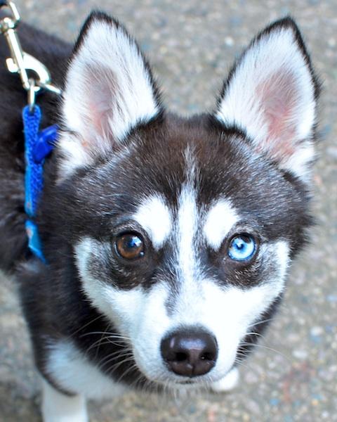 DSC_6599 - Version 22013-07-24-meesha-sunday dog-© 2011 Penny Cherubino