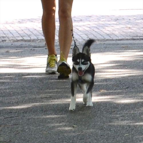 DSC_6602 - Version 22013-07-24-meesha-sunday dog-© 2011 Penny Cherubino