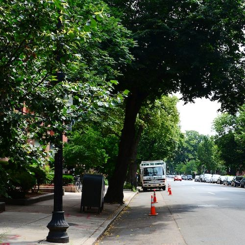 CHE_8310 - Version 22013-07-22-boston-beacon-street-tree-trimming-© 2011 Penny Cherubino