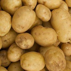 IMG_6660 - Version 22013-07-23-stillmans-new-potatoes-© 2011 Penny Cherubino