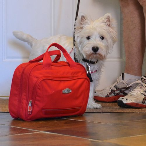 DSC_7075 - Version 22013-08-05-poppy-westie-emergency-kit-© 2011 Penny Cherubino