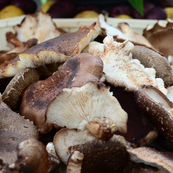 CHE_9469 - Version 22013-08-27-sienna-farm-mushrooms-© 2011 Penny Cherubino