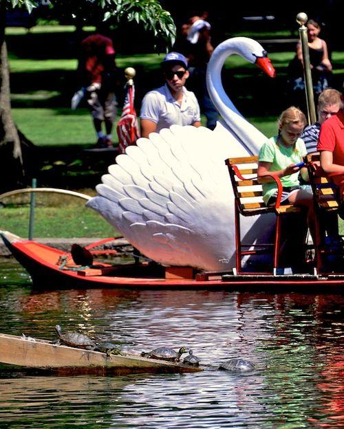 CHE_9706 - Version 22013-08-28-turtle-traffic jam-public-garden-boston-© 2011 Penny Cherubino
