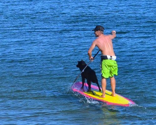 DSC_8153 - Version 22013-09-08-dogs-paddle-boards-provencetown-harbor-© 2011 Penny Cherubino