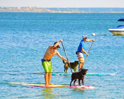 CHE_9807 - Version 22013-09-08-dogs-paddle-boards-provencetown-harbor-© 2011 Penny Cherubino