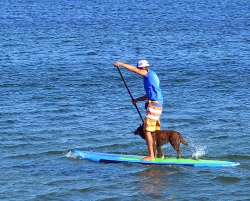 DSC_8154 - Version 22013-09-08-dogs-paddle-boards-provencetown-harbor-© 2011 Penny Cherubino