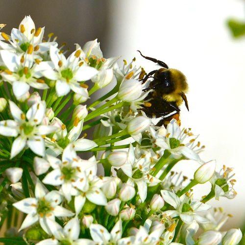 CHE_9987 - Version 22013-09-11-busy-bees-autumn-© 2011 Penny Cherubino