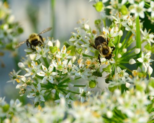 CHE_9992 - Version 22013-09-11-busy-bees-autumn-© 2011 Penny Cherubino