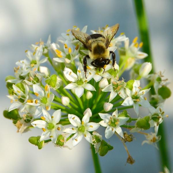 CHE_9990 - Version 22013-09-11-busy-bees-autumn-© 2011 Penny Cherubino