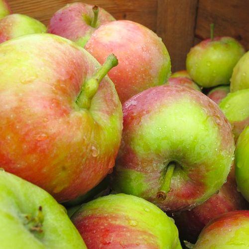 IMG_6653 - Version 22013-07-23-july-apples-keown-orchard-© 2011 Penny Cherubino