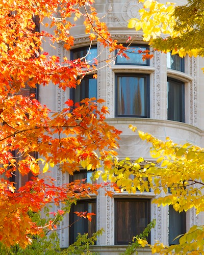 -fall foliage- commonwealth ave-boston-back bay