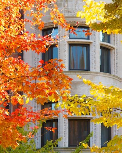-fall foliage- commonwealth ave-boston-back bay