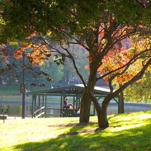 IMG_6919 - Version 22013-10-17-fall-colors-leaves-public-garden-© 2011 Penny Cherubino
